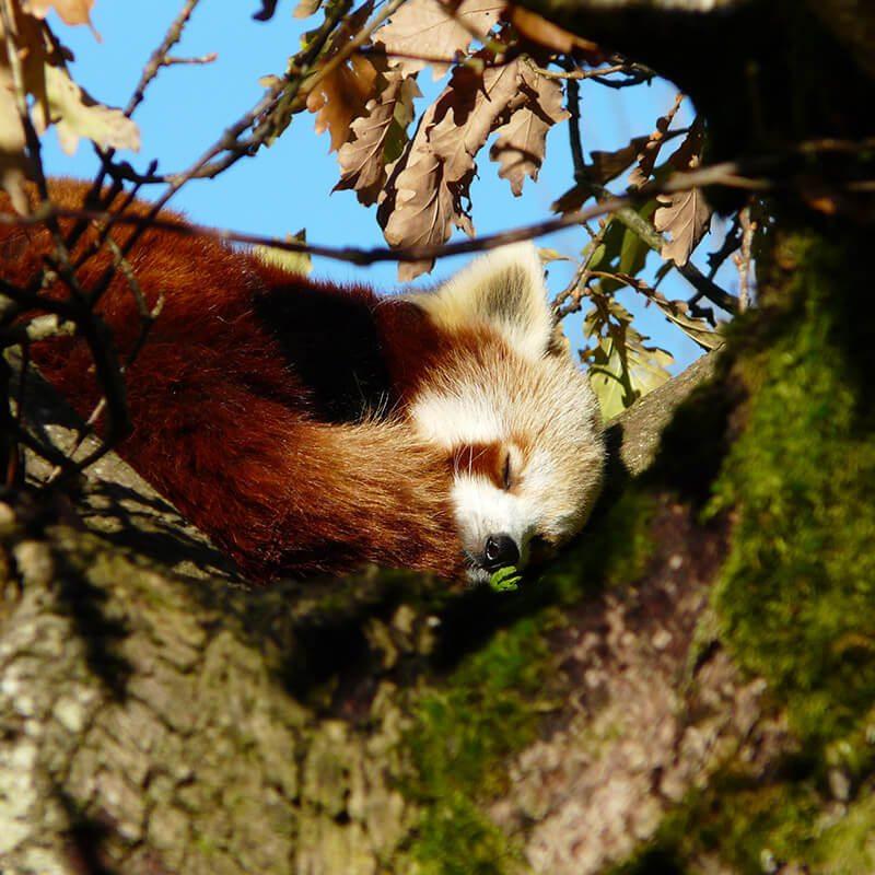 Award Winning Cumbria Zoo in Keswick | Lake District