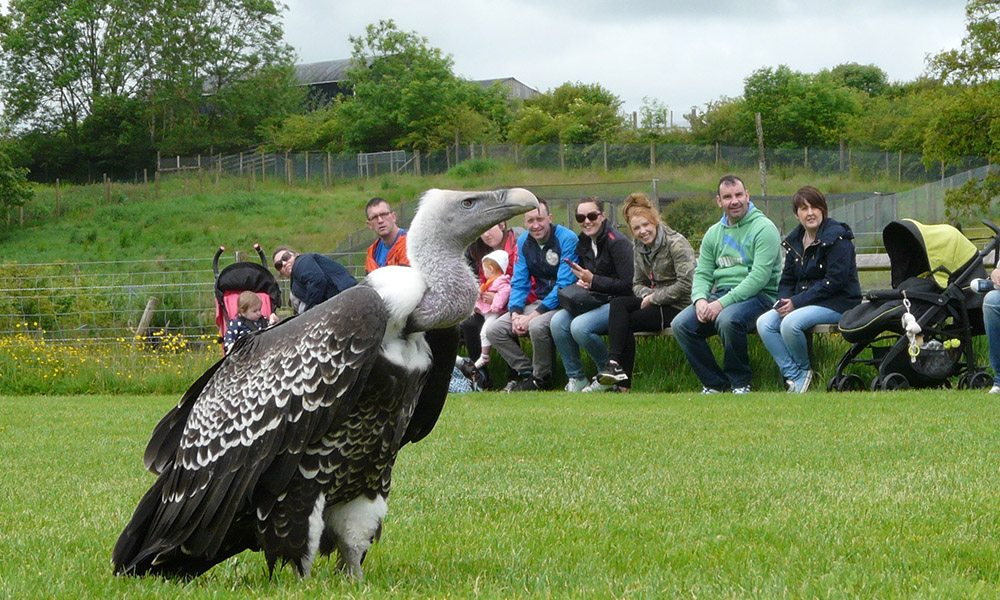 Vulture programme