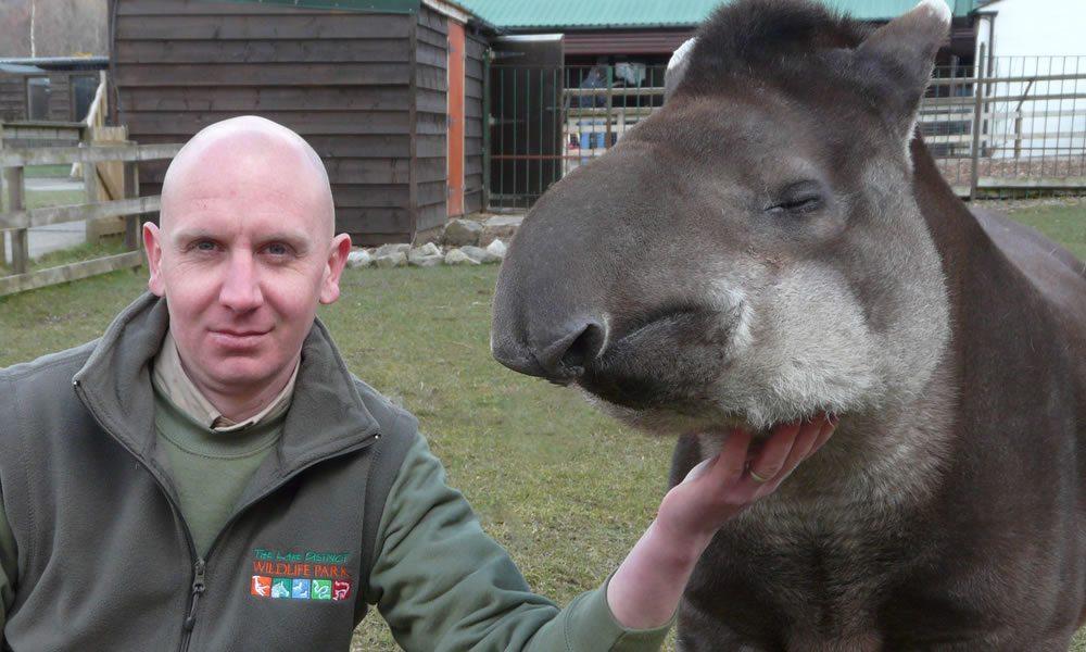 tapir_3