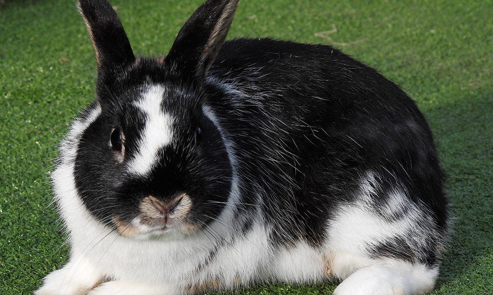rabbit 1000x600