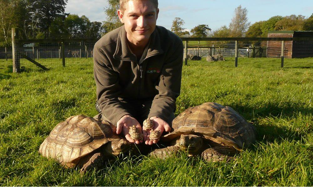 tortoise4