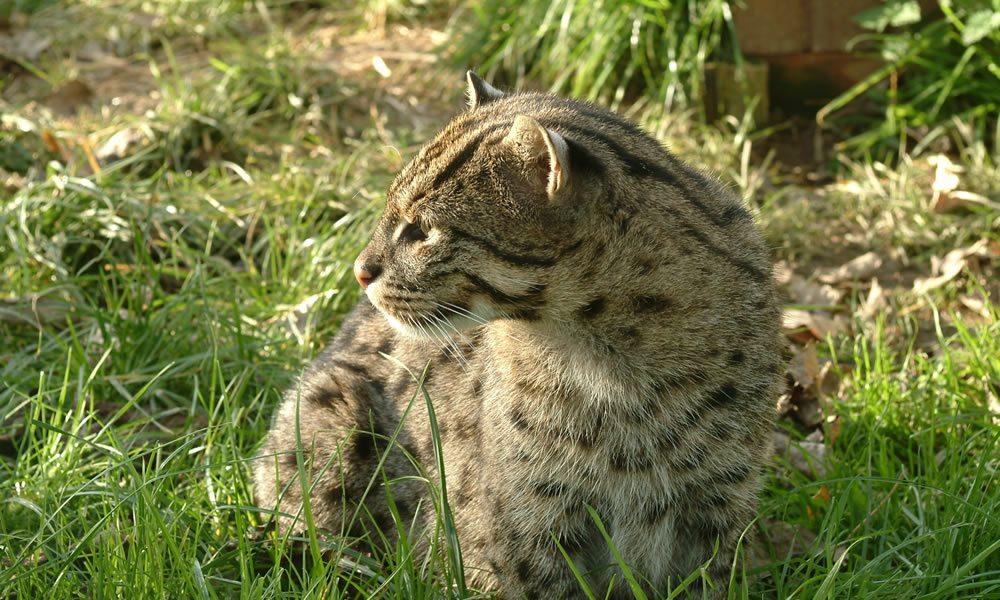 fishingcat1