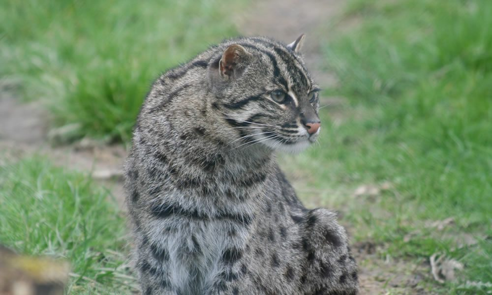 fishingcat2