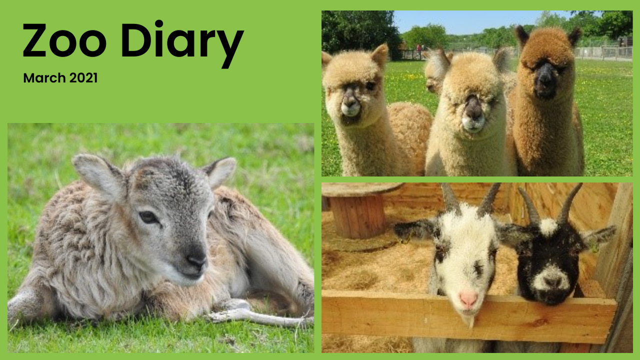 Zoo Diary Template-Max-Quality(3)