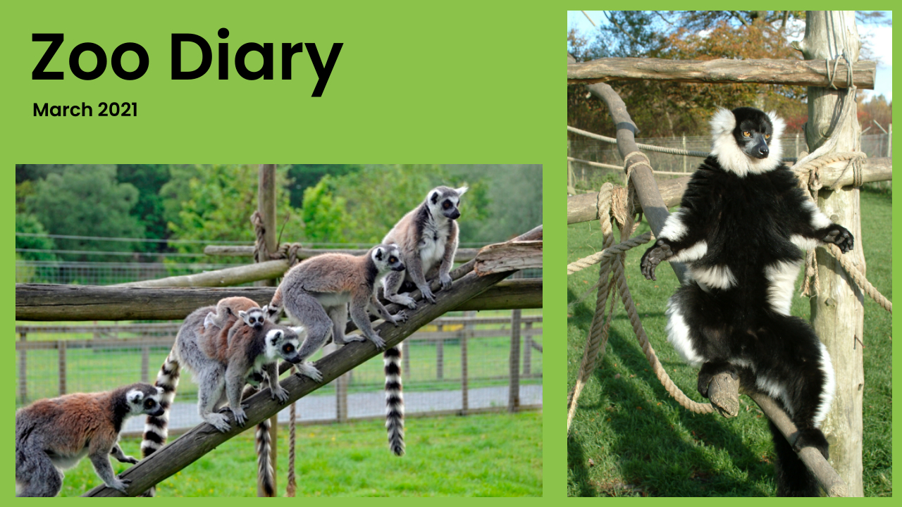 Zoo Diary Template-Max-Quality(4)