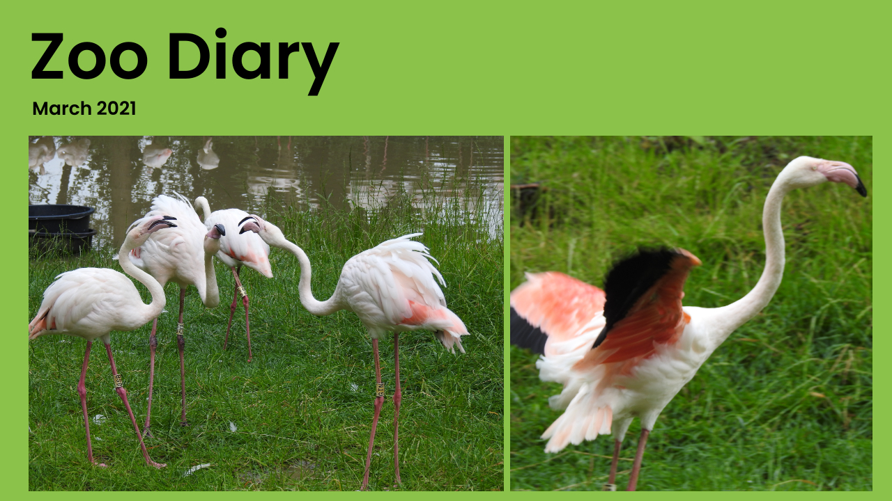 Zoo Diary Template-Max-Quality(5)