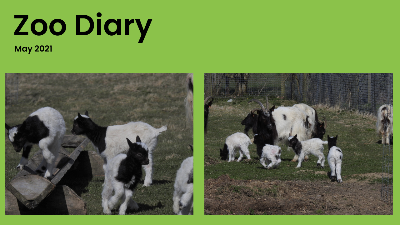 Zoo Diary Template-Max-Quality(8)