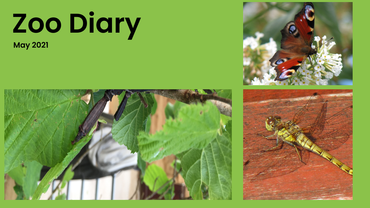 Zoo Diary Template-Max-Quality(9)