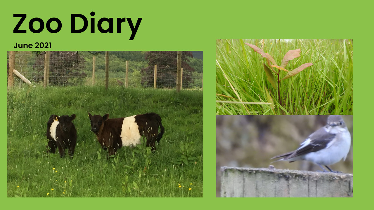 Zoo Diary Template-High-Quality(1)
