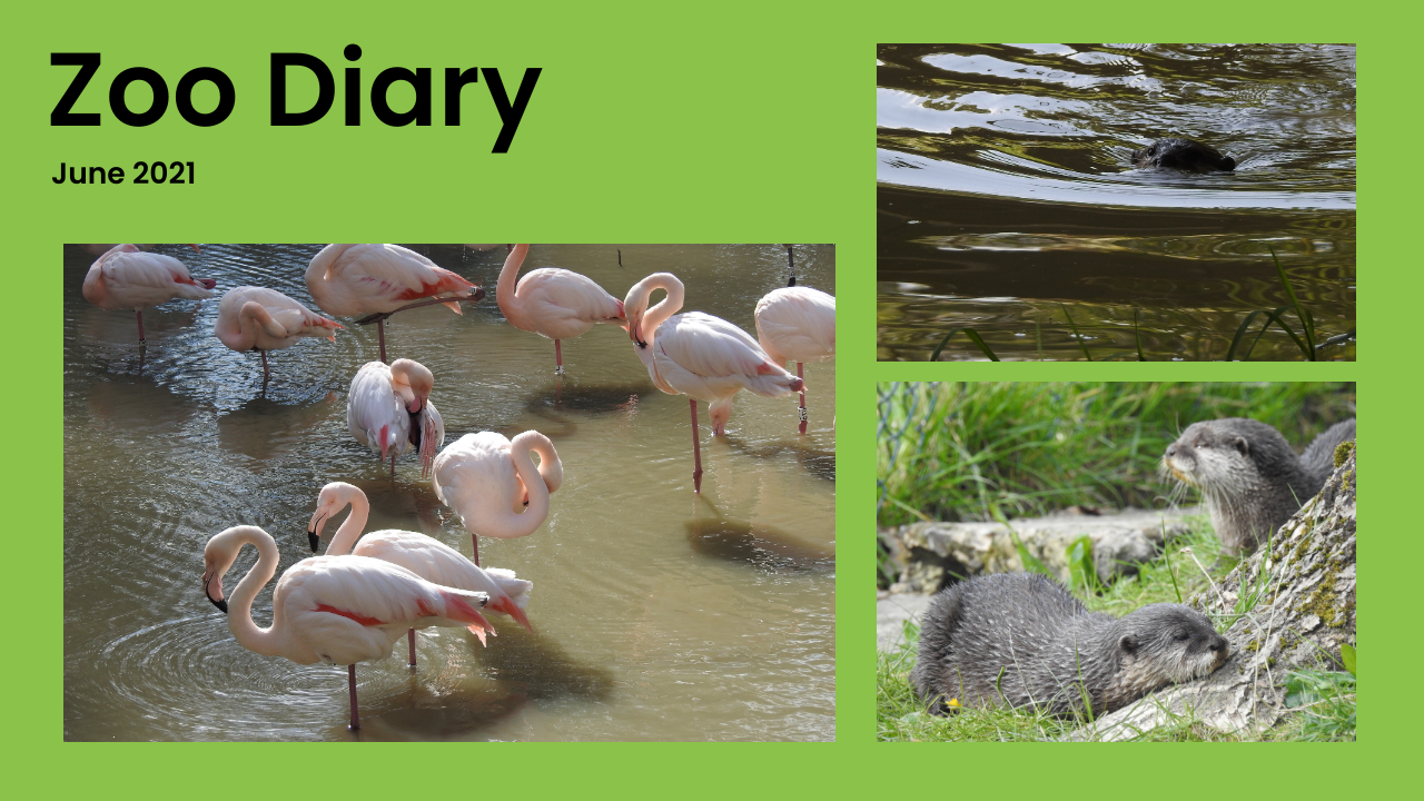 Zoo Diary Template-Max-Quality(11)