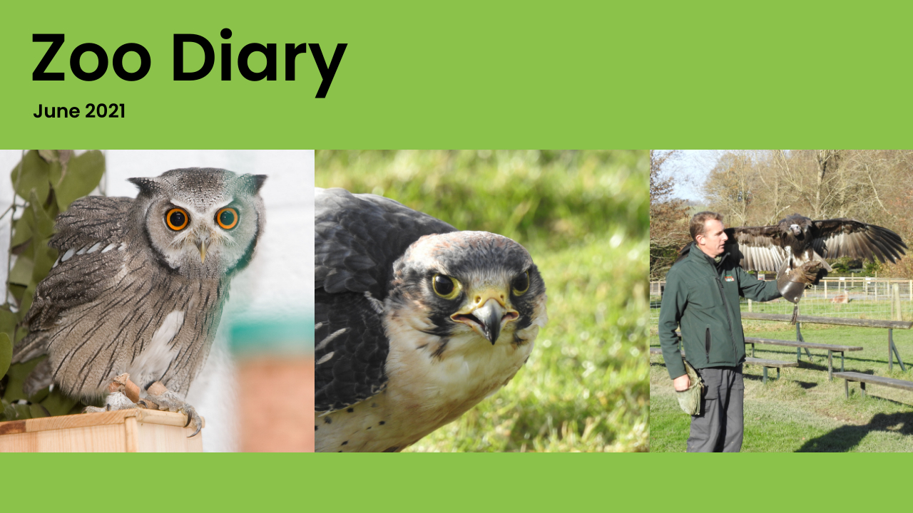 Zoo Diary Template-Max-Quality(12)