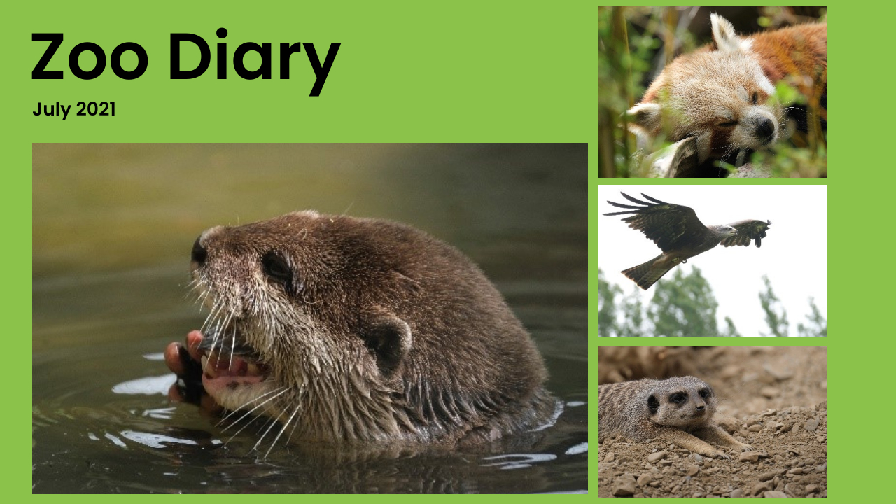 Zoo Diary Template-Max-Quality(13)
