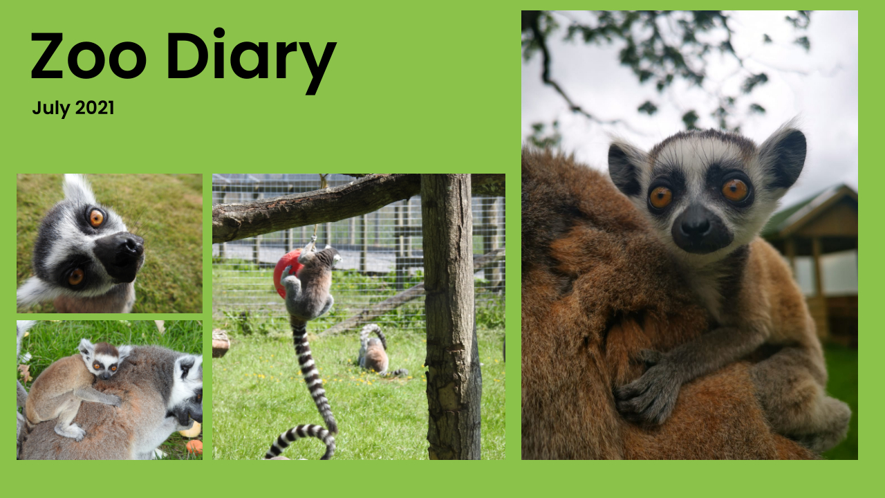 Zoo Diary Template-Max-Quality(14)