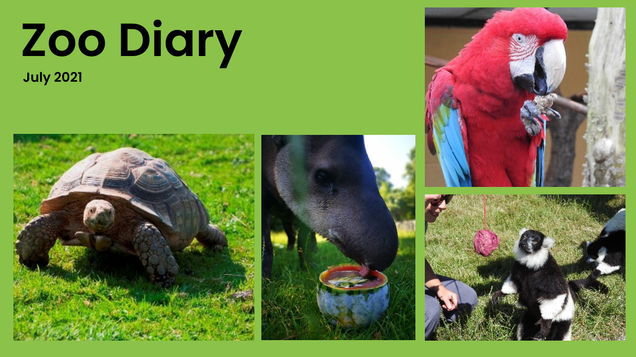 Zoo Diary Template-Max-Quality(15)