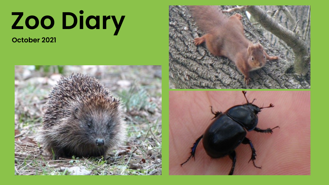 Zoo Diary Template-Max-Quality(2)